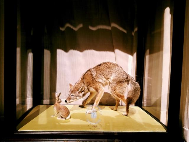 coyote_bunny